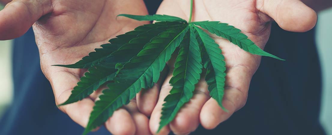 strafe für Cannabisbesitz, Cannabis Besitz strafe, Cannabis, Cannabisplantage entdeckt